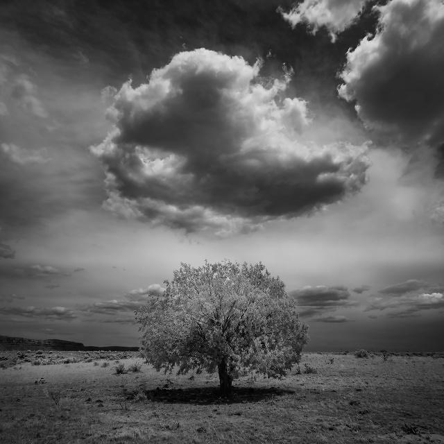 Kaibab Indian Reservation, Arizona, United States